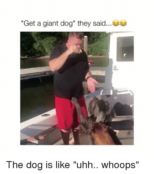 "Giant, Dog, and They: ""Get a giant dog"" they said The dog is like ""uhh.. whoops"""