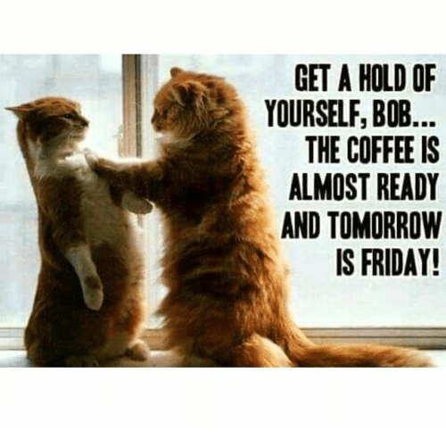 Tomorrow Is Friday: GET A HOLD OF  YOURSELF, BOB.  THE COFFEE IS  ALMOST READY  AND TOMORROW  IS FRIDAY!