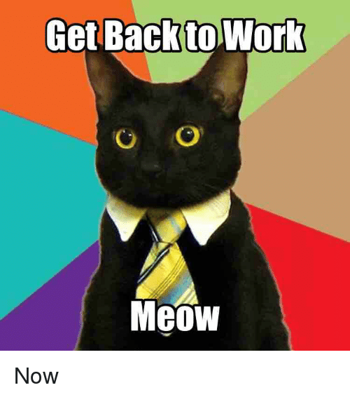 Reddit, Work, and Back: Get Back to Work  O O  Meow Now