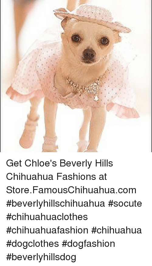 memes: Get Chloe's Beverly Hills Chihuahua Fashions at Store.FamousChihuahua.com #beverlyhillschihuahua #socute #chihuahuaclothes #chihuahuafashion #chihuahua #dogclothes #dogfashion #beverlyhillsdog