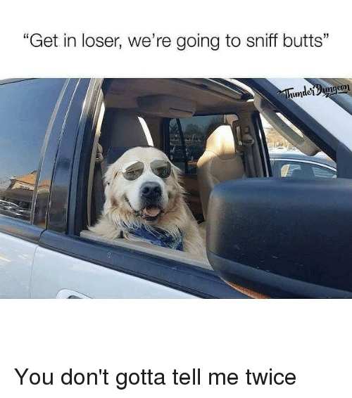 """Get In Losers: """"Get in loser, we're going to sniff butts""""  unde Dungeon You don't gotta tell me twice"""