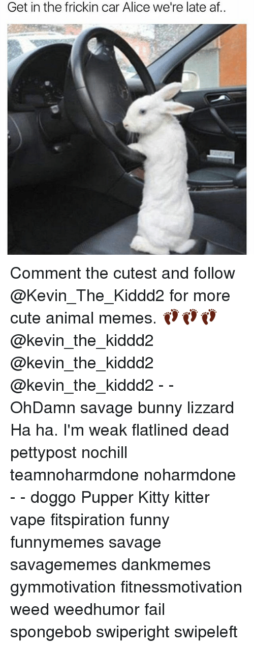 Af, Cute, and Fail: Get in the frickin car Alice we're late af.. Comment the cutest and follow @Kevin_The_Kiddd2 for more cute animal memes. 👣👣👣@kevin_the_kiddd2 @kevin_the_kiddd2 @kevin_the_kiddd2 - - OhDamn savage bunny lizzard Ha ha. I'm weak flatlined dead pettypost nochill teamnoharmdone noharmdone - - doggo Pupper Kitty kitter vape fitspiration funny funnymemes savage savagememes dankmemes gymmotivation fitnessmotivation weed weedhumor fail spongebob swiperight swipeleft