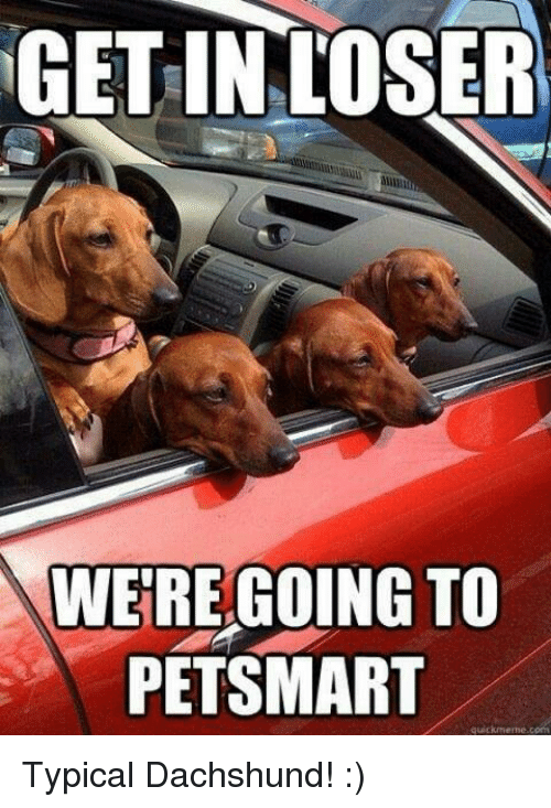 Memes, Petsmart, and 🤖: GET INLOSER  WE'RE GOING TO  PETSMART Typical Dachshund! :)