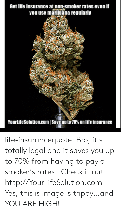 You Are High: Get lite insurance at non-smoker rates even if  you use marijuana regularly  YourLifeSolution.com | Save up to 70% on life insurance life-insurancequote:  Bro, it's totally legal and it saves you up to 70% from having to pay a smoker's rates. Check it out. http://YourLifeSolution.com  Yes, this is image is trippy…and YOU ARE HIGH!