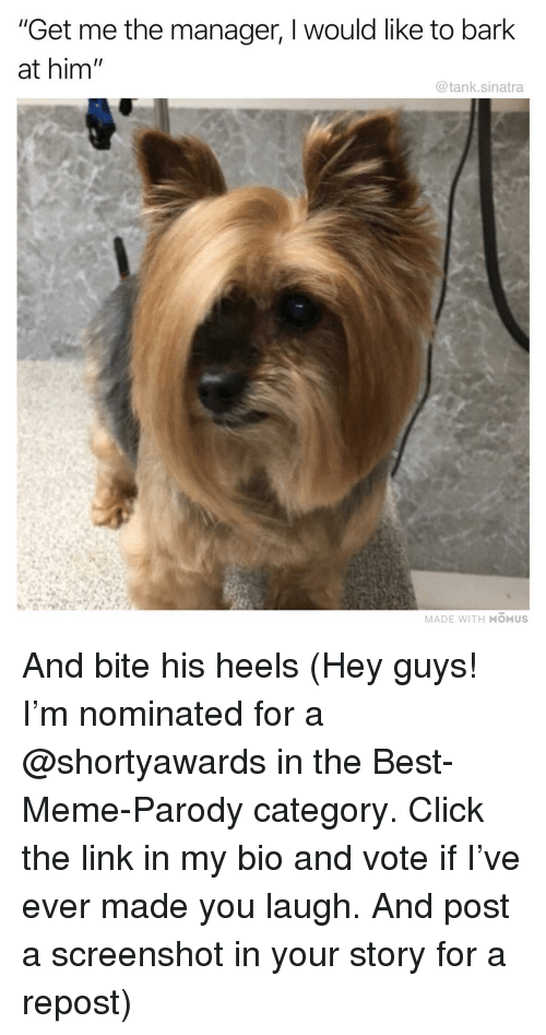 """Parody: """"Get me the manager, I would like to bark  at him  @tank.sinatra  MADE WITH MOMUS And bite his heels (Hey guys! I'm nominated for a @shortyawards in the Best-Meme-Parody category. Click the link in my bio and vote if I've ever made you laugh. And post a screenshot in your story for a repost)"""