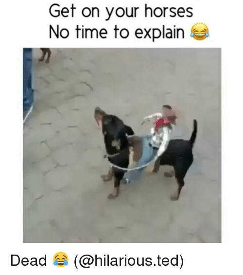 no time to explain: Get on your horses  No time to explain Dead 😂 (@hilarious.ted)