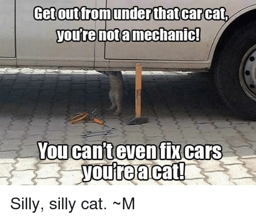 How To Get A Cat From Under A Car