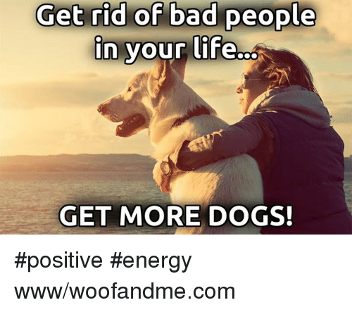 25 best memes about dogs dogs memes How to get rid of bad energy