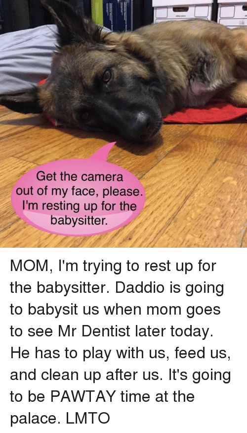 Memes, Camera, and Time: Get the camera  out of my face, please.  I'm resting up for the  babysitter. MOM, I'm trying to rest up for the babysitter.  Daddio is going to babysit us when mom goes to see Mr Dentist later today. He has to play with us, feed us, and clean up after us. It's going to be PAWTAY time at the palace. LMTO