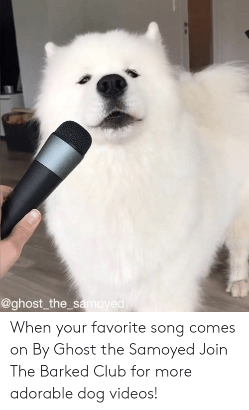 dog videos: @ghost_the s  ed When your favorite song comes on By Ghost the Samoyed  Join The Barked Club for more adorable dog videos!