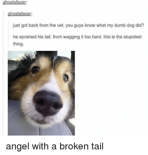 Wagging: ghostsfacer:  ghostsfacer:  just got back from the vet. you guys know what my dumb dog did?  he sprained his tail. from wagging it too hard. this is the stupidest  thing. angel with a broken tail