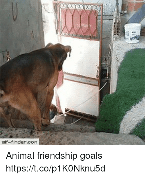 Gif, Goals, and Animal: gif-finder.com Animal friendship goals https://t.co/p1K0Nknu5d