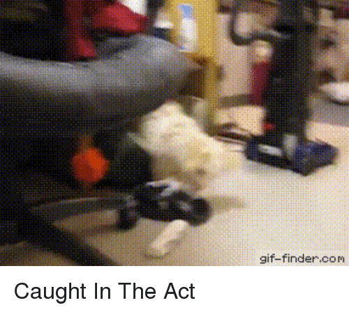 Funny, Gif, and Act: gif-finder.com Caught In The Act