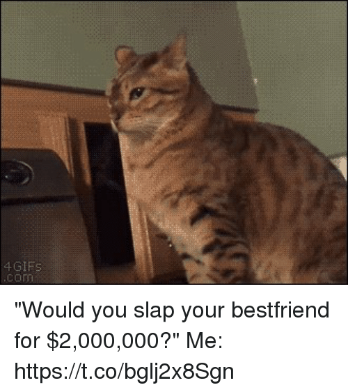 """Gif, Girl Memes, and You: GIF """"Would you slap your bestfriend for $2,000,000?""""   Me: https://t.co/bglj2x8Sgn"""