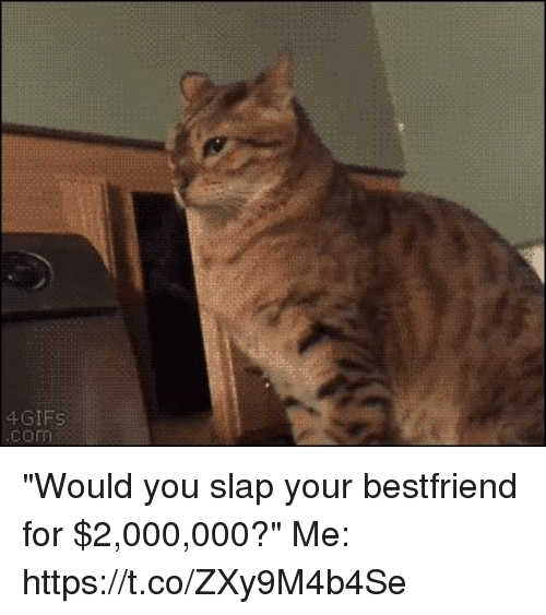 """Gif, Girl Memes, and You: GIF """"Would you slap your bestfriend for $2,000,000?""""   Me: https://t.co/ZXy9M4b4Se"""