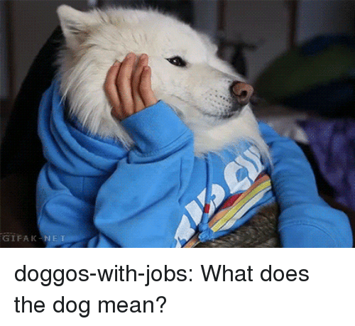 Gifak: GIFAK-N doggos-with-jobs:  What does the dog mean?