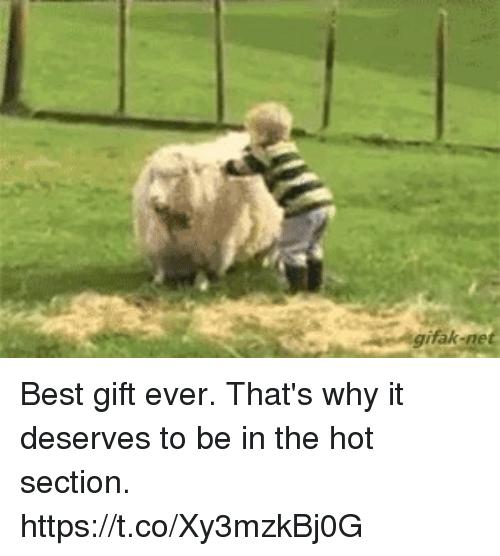 Gifak Net: gifak-net Best gift ever.  That's why it deserves to be in the hot section. https://t.co/Xy3mzkBj0G