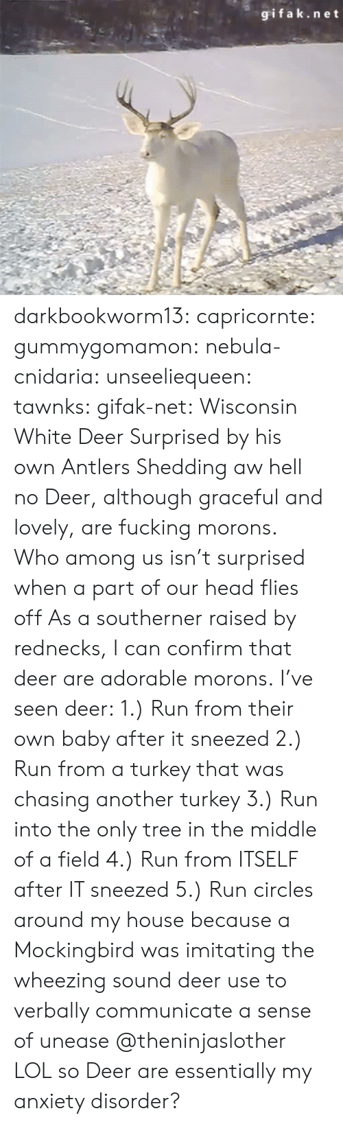 Gifak: gifak.net darkbookworm13:  capricornte:  gummygomamon:  nebula-cnidaria:  unseeliequeen:  tawnks:  gifak-net:  Wisconsin White Deer Surprised by his own Antlers Shedding   aw hell no  Deer, although graceful and lovely, are fucking morons.   Who among us isn't surprised when a part of our head flies off   As a southerner raised by rednecks, I can confirm that deer are adorable morons. I've seen deer: 1.) Run from their own baby after it sneezed 2.) Run from a turkey that was chasing another turkey 3.) Run into the only tree in the middle of a field 4.) Run from ITSELF after IT sneezed 5.) Run circles around my house because a Mockingbird was imitating the  wheezing sound deer use to verbally communicate a sense of unease   @theninjaslother  LOL so Deer are essentially my anxiety disorder?