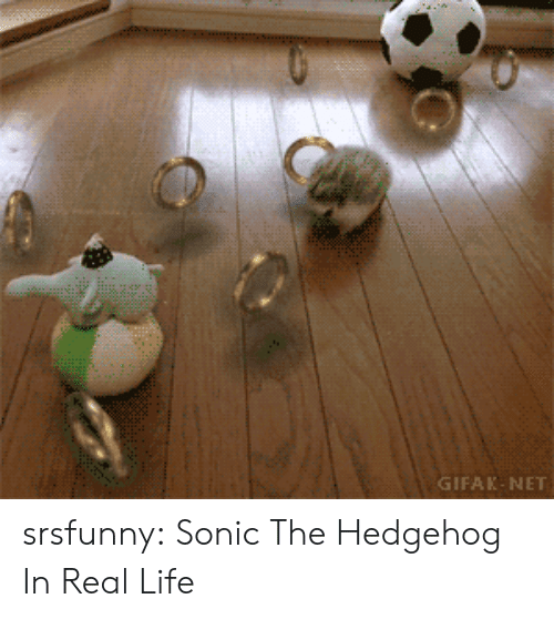 Gifak: GIFAK-NET srsfunny:  Sonic The Hedgehog In Real Life