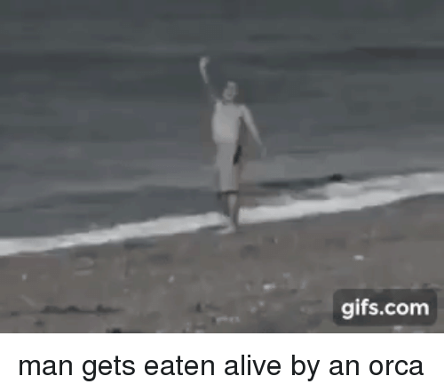 orca: gifs.com man gets eaten alive by an orca