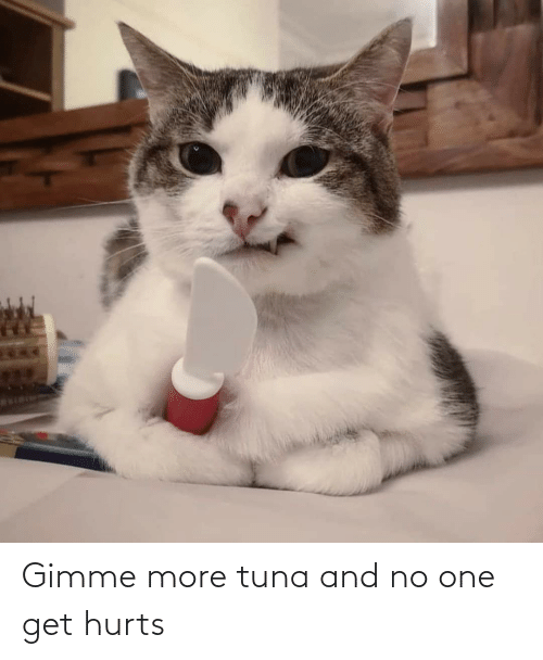 gimme more: Gimme more tuna and no one get hurts