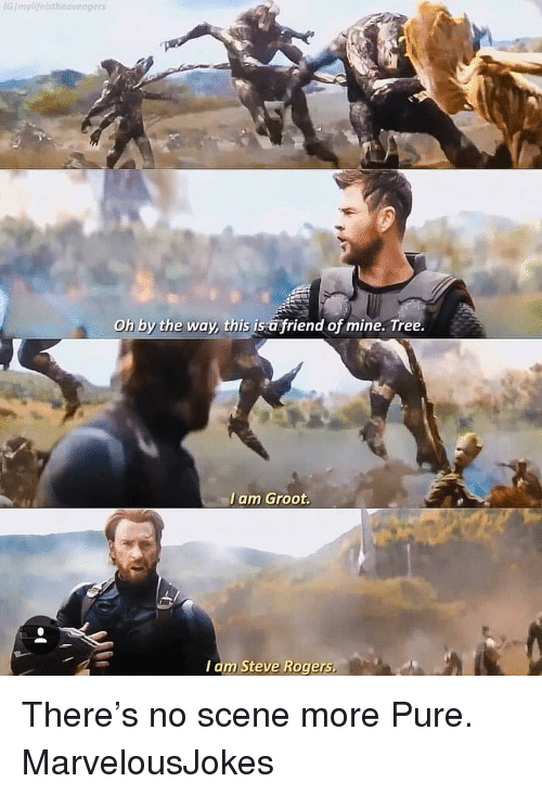 i am groot: GImylifelstheavengers  Oh by the way, this is a friend of mine. Tree.  I am Groot.  I am Steve Rogers There's no scene more Pure. MarvelousJokes