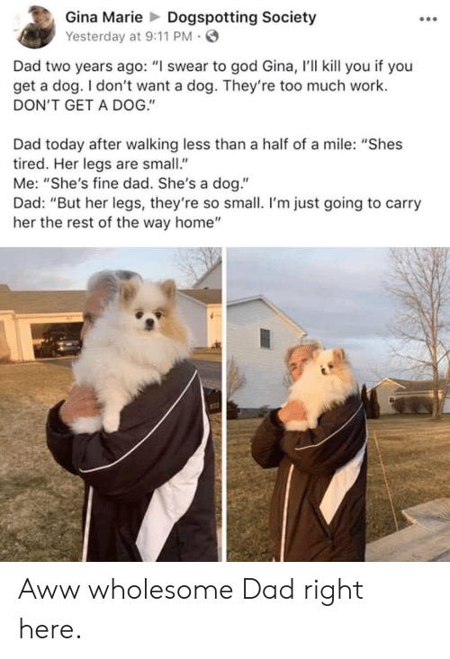 """I Swear To God: Gina MarieDogspotting Society  Yesterday at 9:11 PM  Dad two years ago: """"I swear to god Gina, r'll kill you if you  get a dog. I don't want a dog. They're too much work.  DON'T GET A DOG.""""  Dad today after walking less than a half of a mile: """"Shes  tired. Her legs are small""""  Me: """"She's fine dad. She's a dog.""""  Dad: """"But her legs, they're so small. I'm just going to carry  her the rest of the way home""""  st3 Aww wholesome Dad right here."""