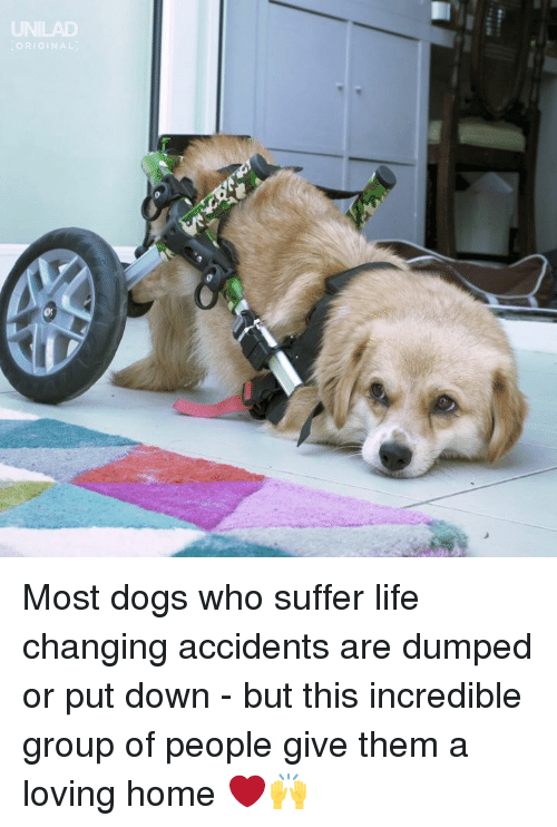 Dank, Dogs, and Life: GINA Most dogs who suffer life changing accidents are dumped or put down - but this incredible group of people give them a loving home ❤️🙌