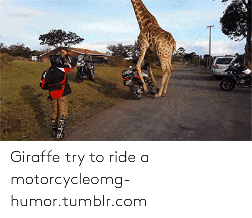 Motorcycle: Giraffe try to ride a motorcycleomg-humor.tumblr.com