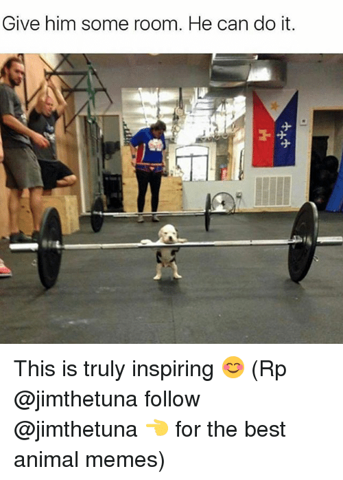 Memes, 🤖, and The Best: Give him some room. He can do it. This is truly inspiring 😊 (Rp @jimthetuna follow @jimthetuna 👈 for the best animal memes)