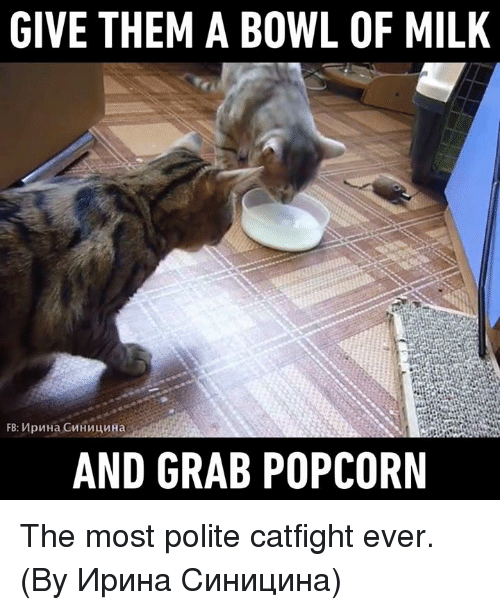Catfighters: GIVE THEM A BOWL OF MILK  AND GRAB POPCORN The most polite catfight ever. (By Ирина Синицина)