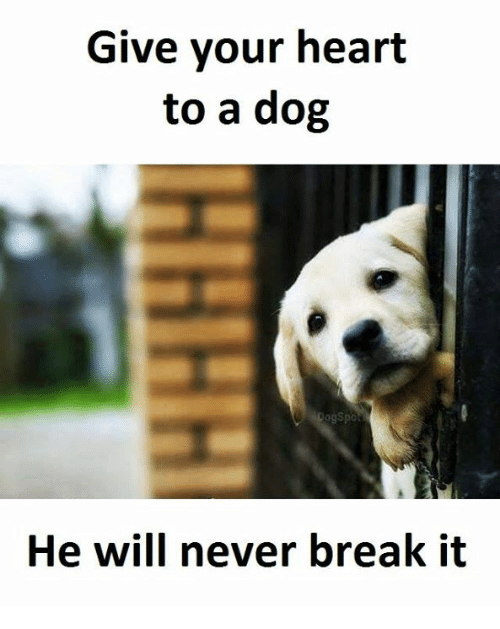 Breaking: Give your heart  to a dog  Cogspo  He will never break it
