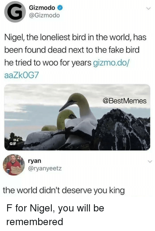 gizmo: Gizmodo  @Gizmodo  Nigel, the loneliest bird in the world, has  been found dead next to the fake bird  he tried to woo for years gizmo.do/  aaZkOG7  @BestMemes  GIF  ryan  @ryanyeetz  the world didn't deserve you king F for Nigel, you will be remembered