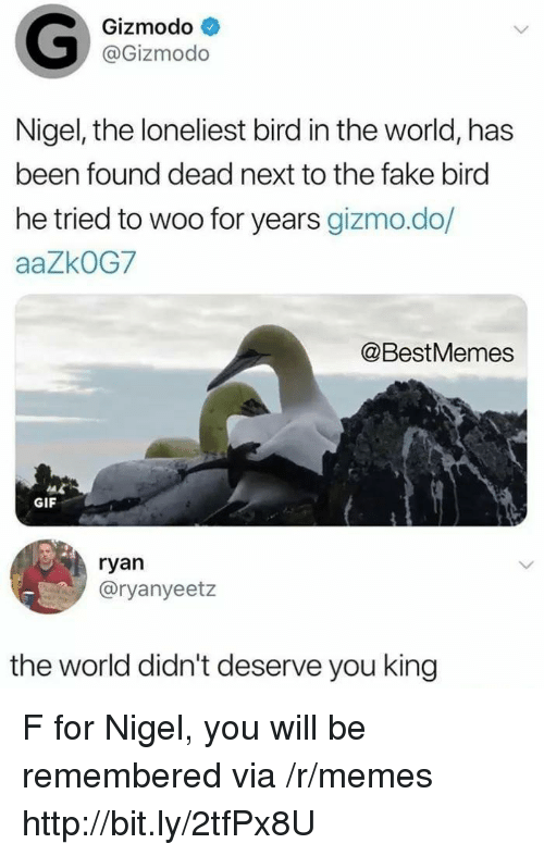 gizmo: Gizmodo  @Gizmodo  Nigel, the loneliest bird in the world, has  been found dead next to the fake bird  he tried to woo for years gizmo.do/  aaZkOG7  @BestMemes  GIF  ryan  @ryanyeetz  the world didn't deserve you king F for Nigel, you will be remembered via /r/memes http://bit.ly/2tfPx8U