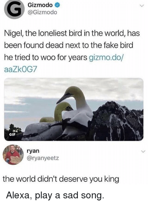 gizmo: Gizmodo  @Gizmodo  Nigel, the loneliest bird in the world, has  been found dead next to the fake birc  he tried to woo for years gizmo.do/  aaZkOG7  GIF  ryan  @ryanyeetz  the world didn't deserve you king Alexa, play a sad song.
