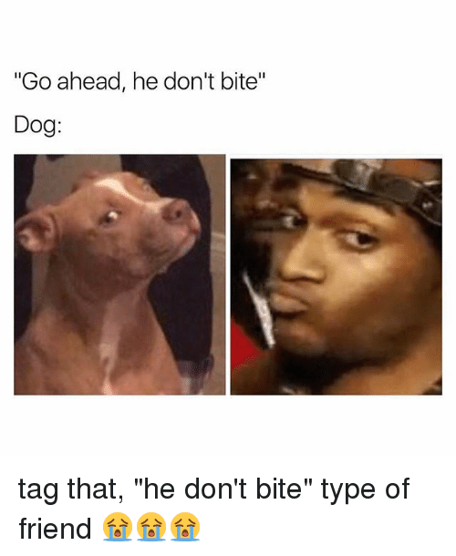 """dog tags: """"Go ahead, he don't bite  Dog tag that, """"he don't bite"""" type of friend 😭😭😭"""