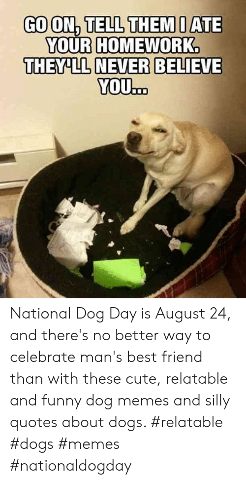 Silly Quotes: GO ON, TELL THEM I ATE  YOUR HOMEWORK.  THEY'LL NEVER BELIEVE  YOU... National Dog Day is August 24, and there's no better way to celebrate man's best friend than with these cute, relatable and funny dog memes and silly quotes about dogs.  #relatable #dogs #memes #nationaldogday