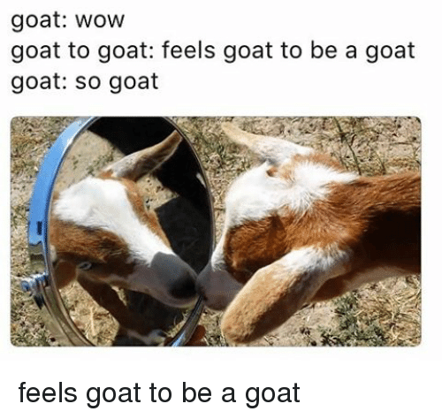 Memes, Goat, and 🤖: goat: wow  goat to goat: feels goat to be a goat  goat: so goat feels goat to be a goat