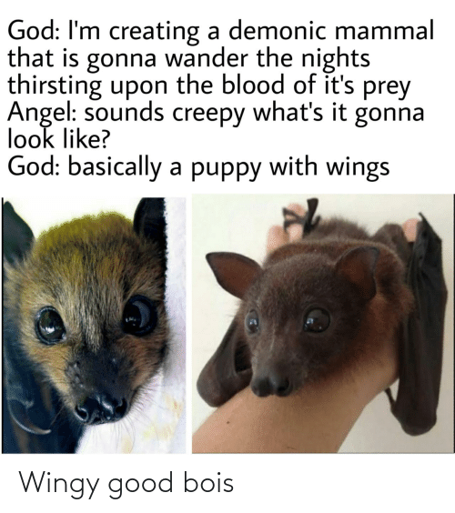 Angel: God: I'm creating a demonic mammal  that is gonna wander the nights  thirsting upon the blood of it's prey  Angel: sounds creepy what's it gonna  look like?  God: basically a puppy with wings Wingy good bois
