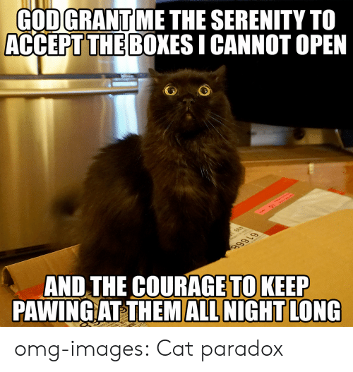 Pawing: GODGRANT ME THE SERENITY TO  ACCEPT THE BOXES I CANNOT OPEN  THE COURAGE TO KEEP  AND  PAWING AT THEM ALL NIGHT LONG omg-images:  Cat paradox