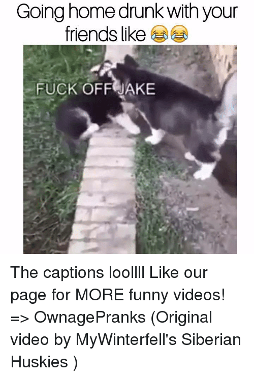 Memes, 🤖, and Page: Going home drunk with your  friends like  FUCK OFF JAKE The captions loollll  Like our page for MORE funny videos! => OwnagePranks (Original video by MyWinterfell's Siberian Huskies )