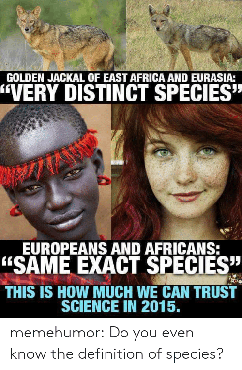 """jackal: GOLDEN JACKAL OF EAST AFRICA AND EURASIA:  """"VERY DISTINCT SPECIES""""  EUROPEANS AND AFRICANS  """"SAME EXACT SPECIES  THIS IS HOW MUCH WE CAN TRUST  SCIENCE IN 2015, memehumor:  Do you even know the definition of species?"""