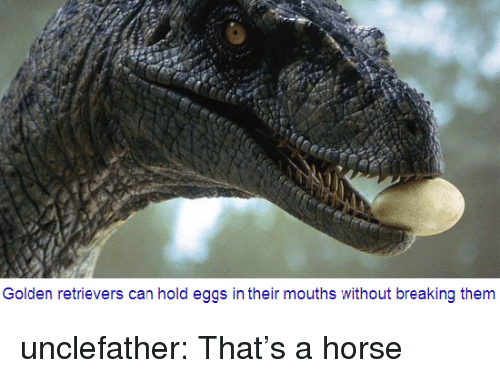 golden retrievers: Golden retrievers can hold eggs in their mouths without breaking them unclefather: That's a horse