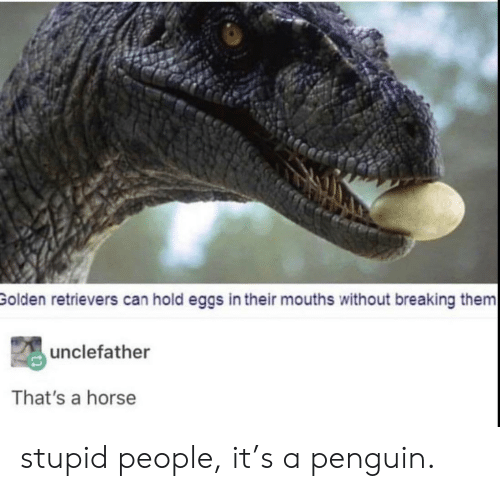Mouths: Golden retrievers can hold eggs in their mouths without breaking them  unclefather  That's a horse stupid people, it's a penguin.