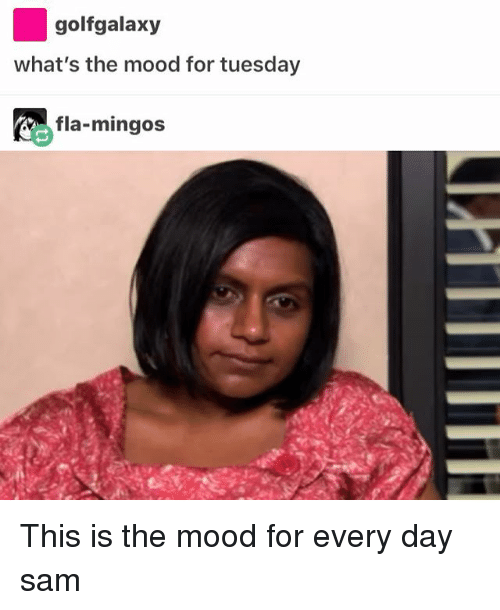 Memes, Mood, and Golf: golf galaxy  what's the mood for tuesday  fla-mingos This is the mood for every day ≪sam≫