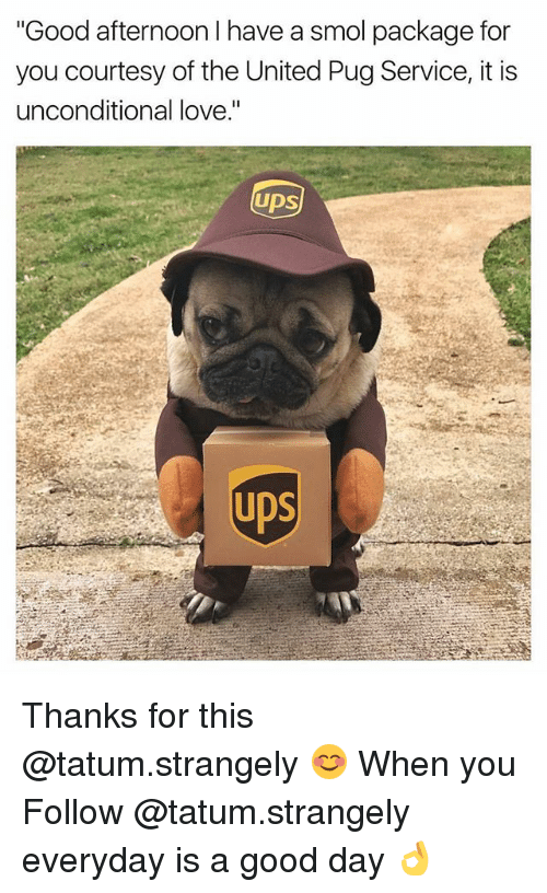 "Pugly: ""Good afternoon I have a smol package for  you courtesy of the United Pug Service, it is  unconditional love.""  UDS  UDS Thanks for this @tatum.strangely 😊 When you Follow @tatum.strangely everyday is a good day 👌"