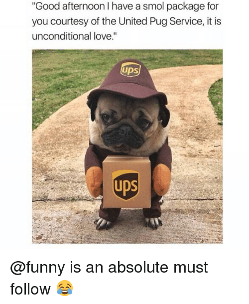 "Funny, Love, and Memes: Good afternoon I have a smol package for  you courtesy of the United Pug Service, it is  unconditional love.""  UDS  UDS @funny is an absolute must follow 😂"