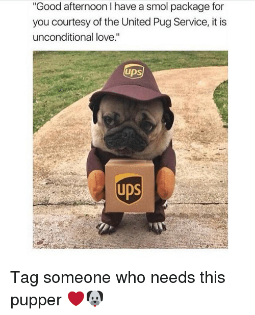 "Love, Girl, and Good: Good afternoon I have a smol package for  you courtesy of the United Pug Service, it is  unconditional love.""  UDS  ps Tag someone who needs this pupper ❤️🐶"