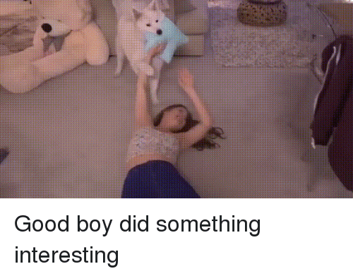 Funny, Good, and Boy: Good boy did something interesting