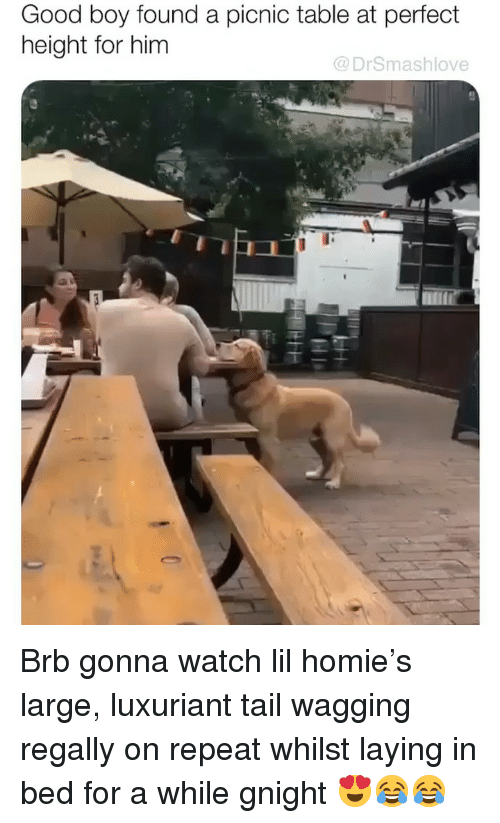 tail wagging: Good boy found a picnic table at perfect  height for him  @DrSmashlove Brb gonna watch lil homie's large, luxuriant tail wagging regally on repeat whilst laying in bed for a while gnight 😍😂😂
